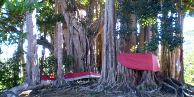 Madagascar sacred tree
